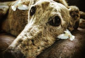 Das Arbeitsbuch für trauernde Hunde