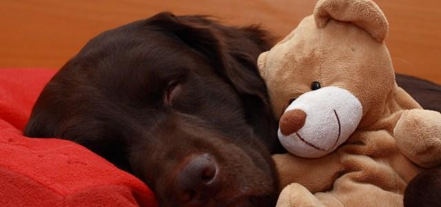 Absichern, aber richtig – Haftpflichtversicherungen für Therapiehunde