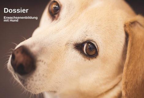 Dogs&Jobs Juli/August 2019 ist da!