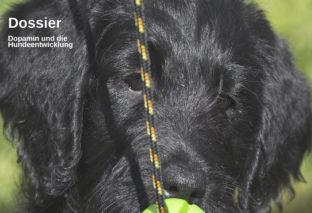 Dogs&Jobs September/Oktober 2019 ist da!