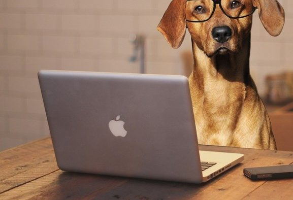 Bürohund: Wann dürfen Vierbeiner mit auf Arbeit?
